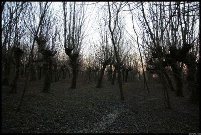 IMG_2548