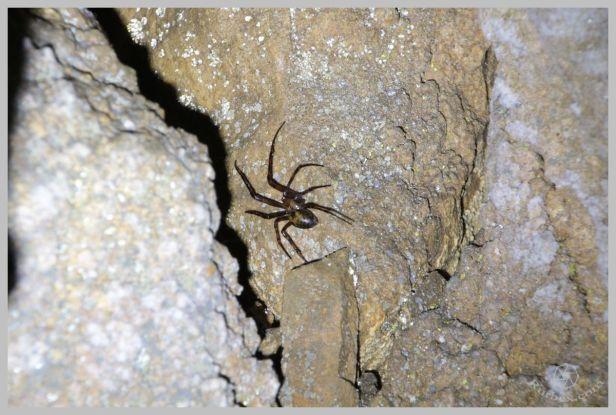 under-castle-rurbex-urbex-underground-grotte-10
