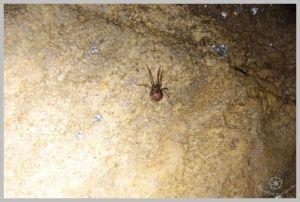 under-castle-rurbex-urbex-underground-grotte-14