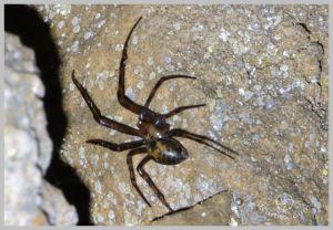 under-castle-rurbex-urbex-underground-grotte-araignee